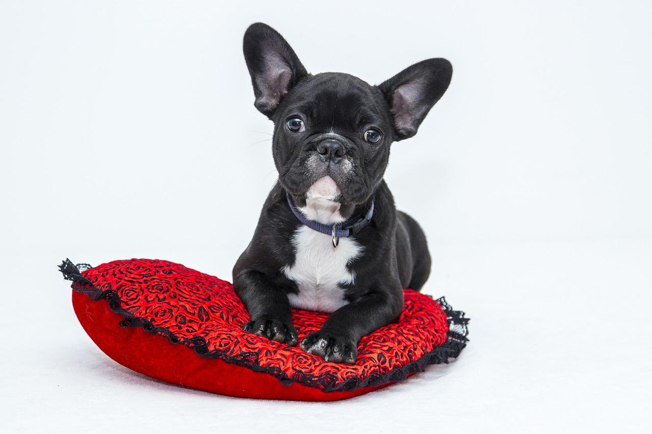 Jak odpowiednio dbać o higienę naszego psa?